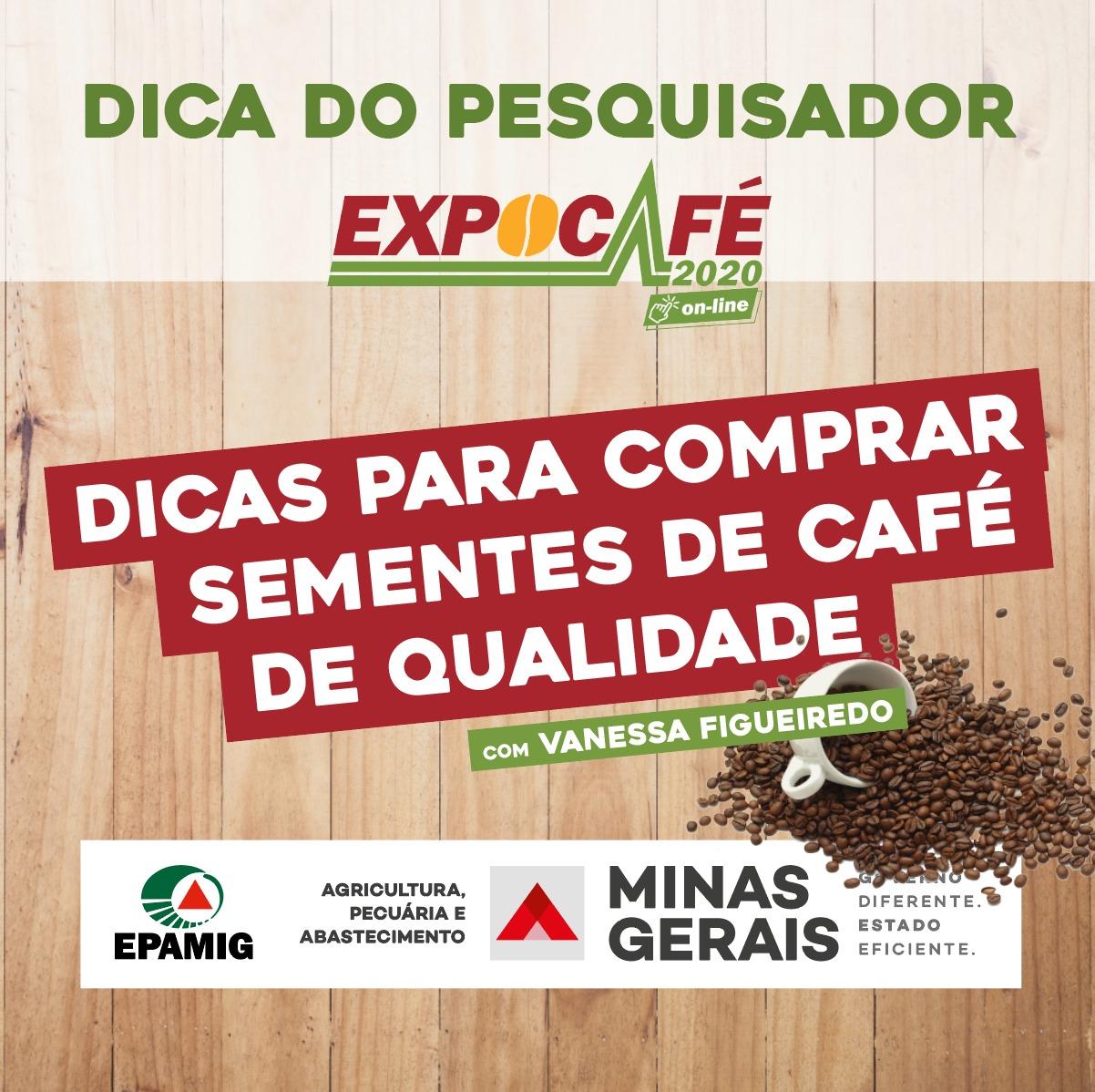 Como comprar sementes de café de qualidade
