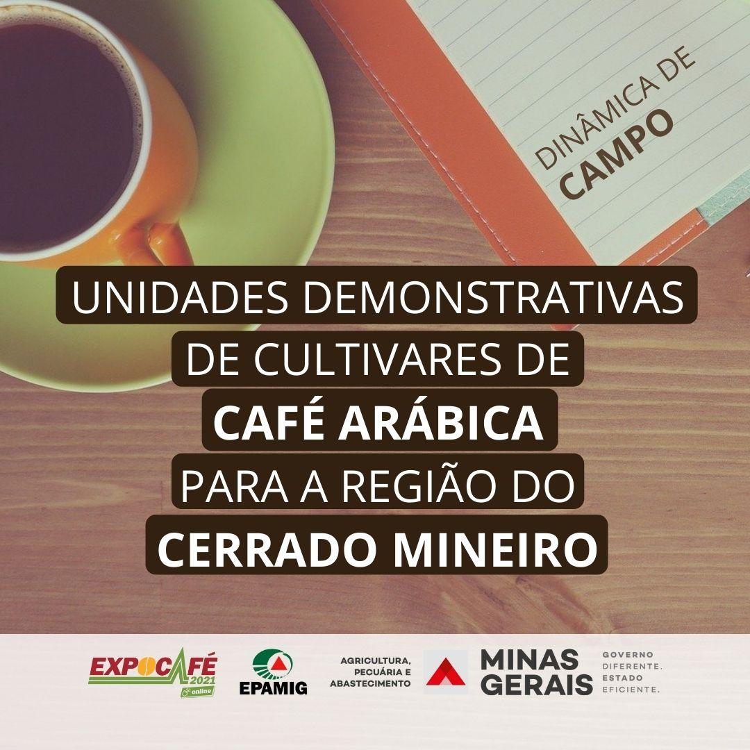 UD de café arábica para a região do Cerrado Mineiro