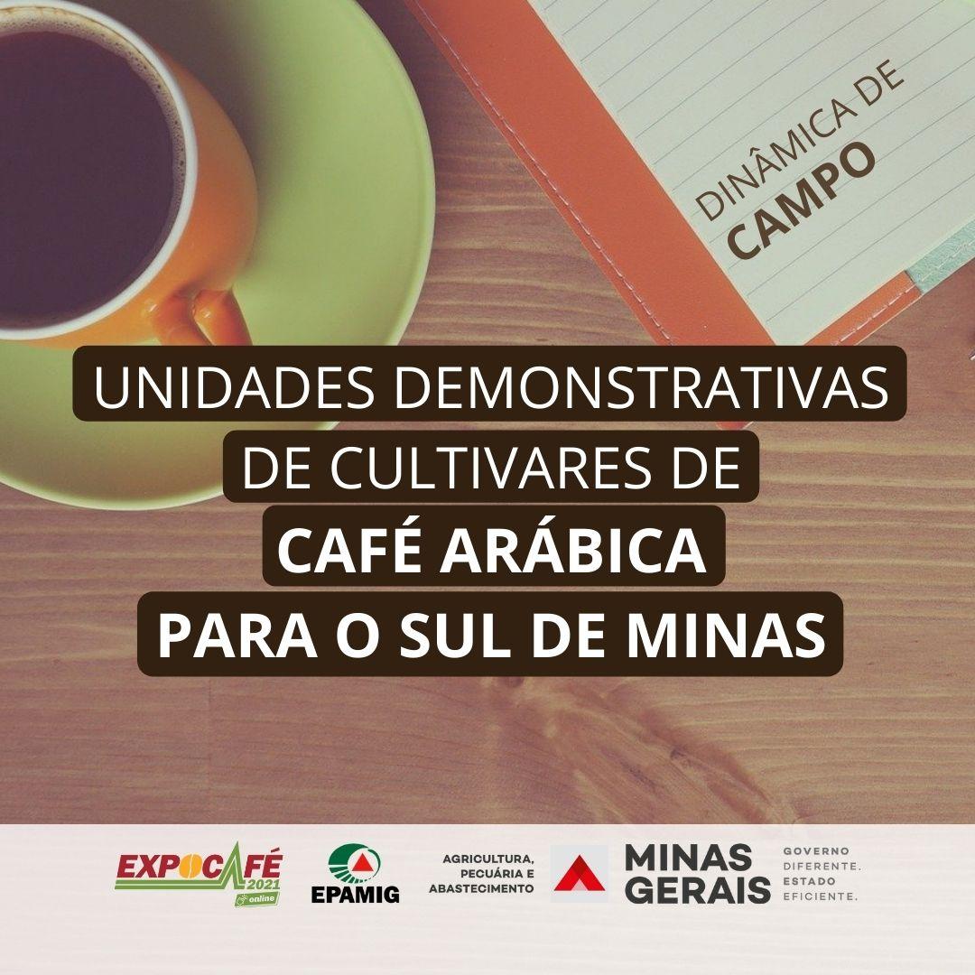UD de cultivares de café para o Sul de Minas Gerais