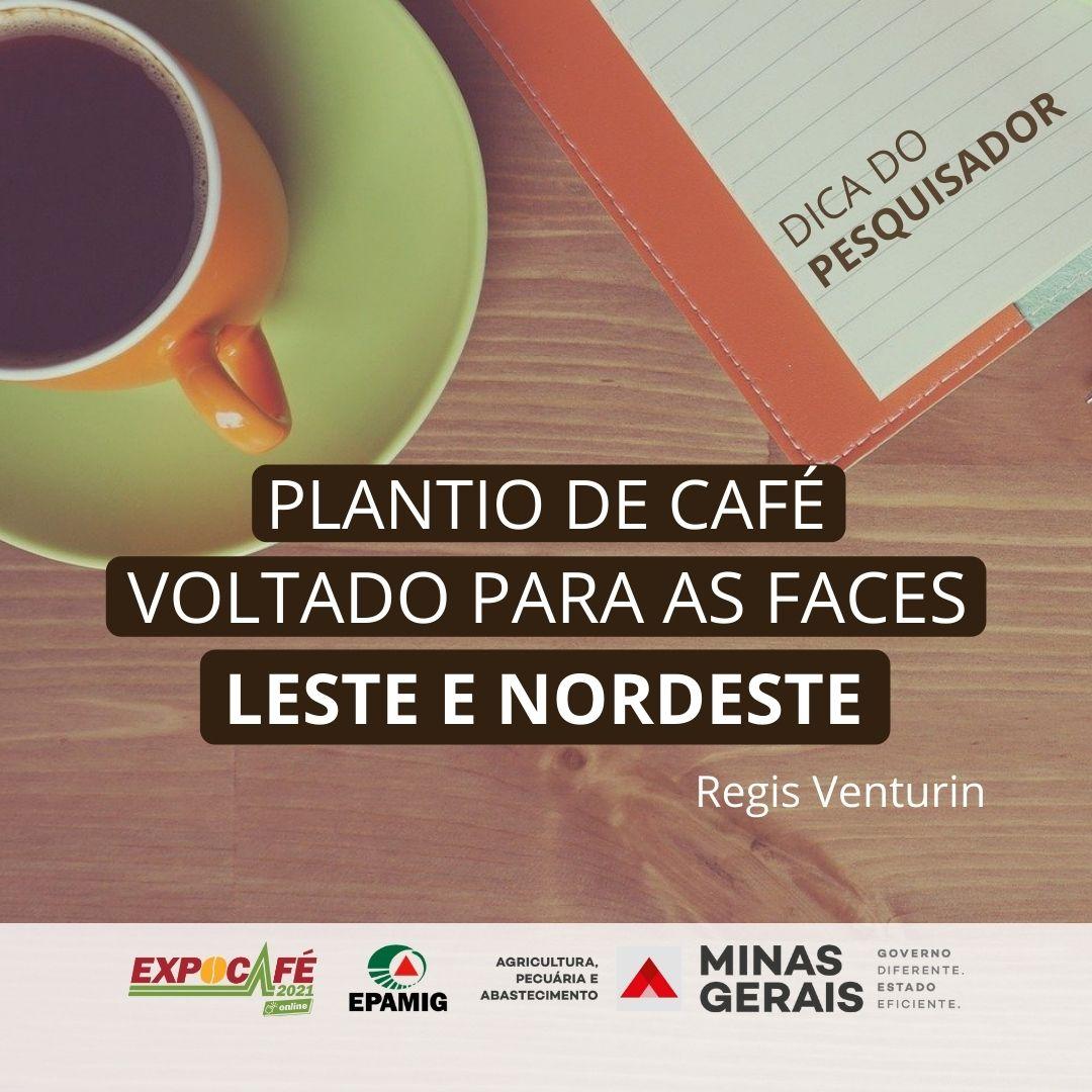 Plantio de café voltado para as faces Leste e Nordeste