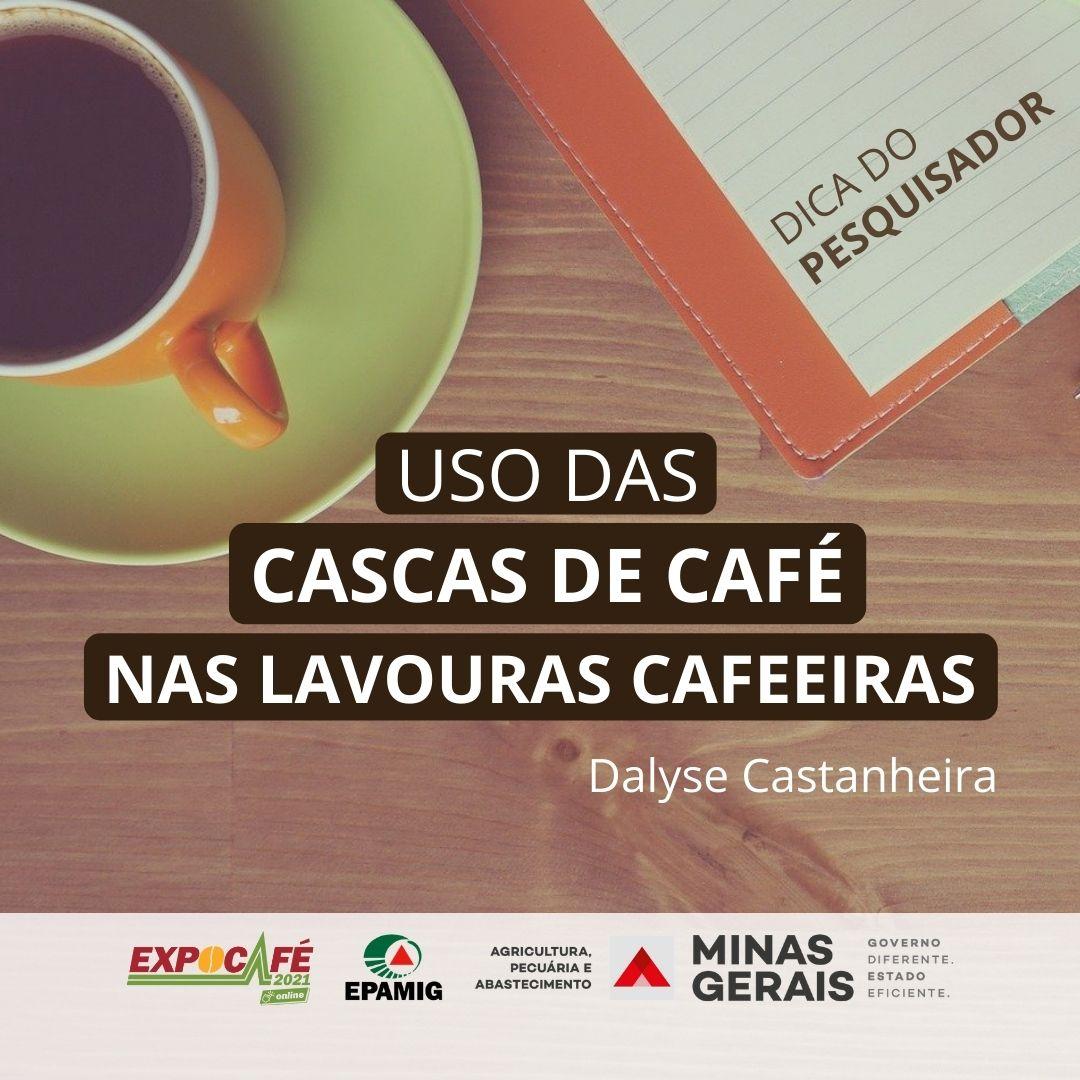 Uso das cascas de café nas lavouras cafeeiras