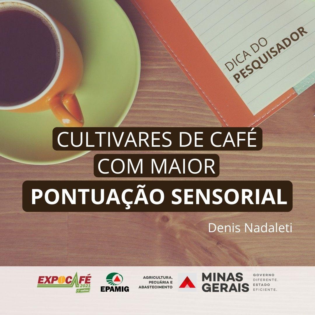 Cultivares de café com maior pontuação sensorial