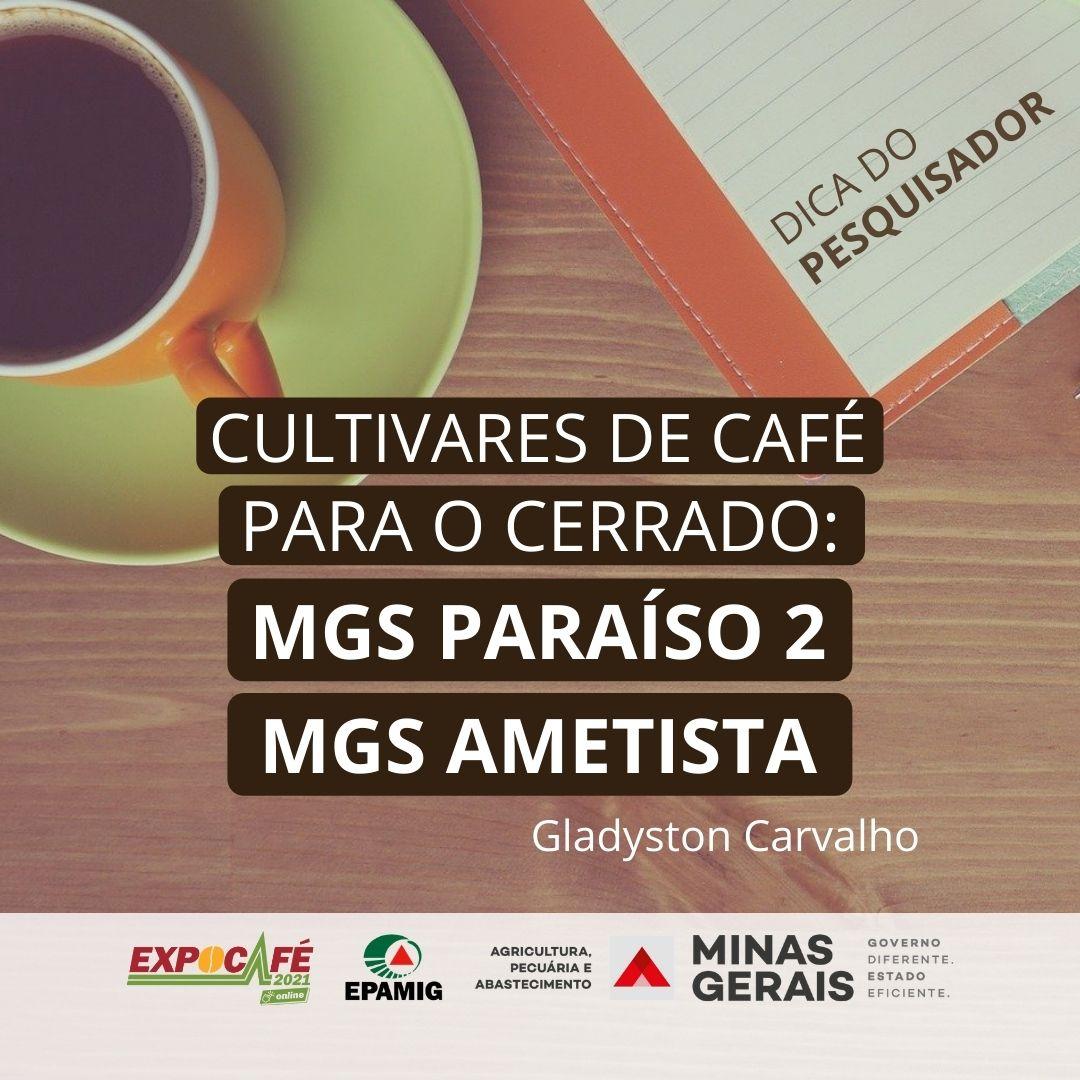 Cultivares de café para o Cerrado: MGS Paraíso 2 e MGS Ametista