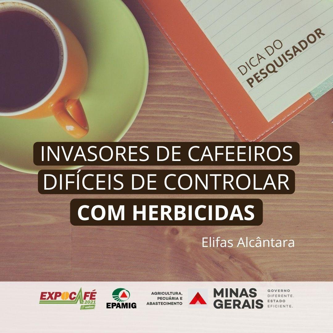 Invasoras de cafeeiros difíceis de controlar com herbicidas