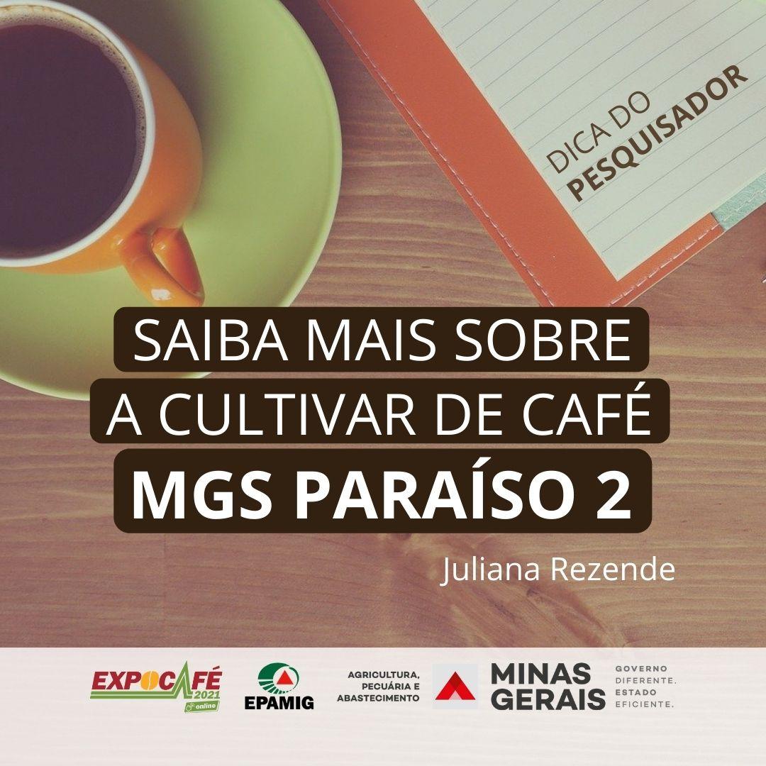 Saiba mais sobre a cultivar de café MGS Paraíso 2