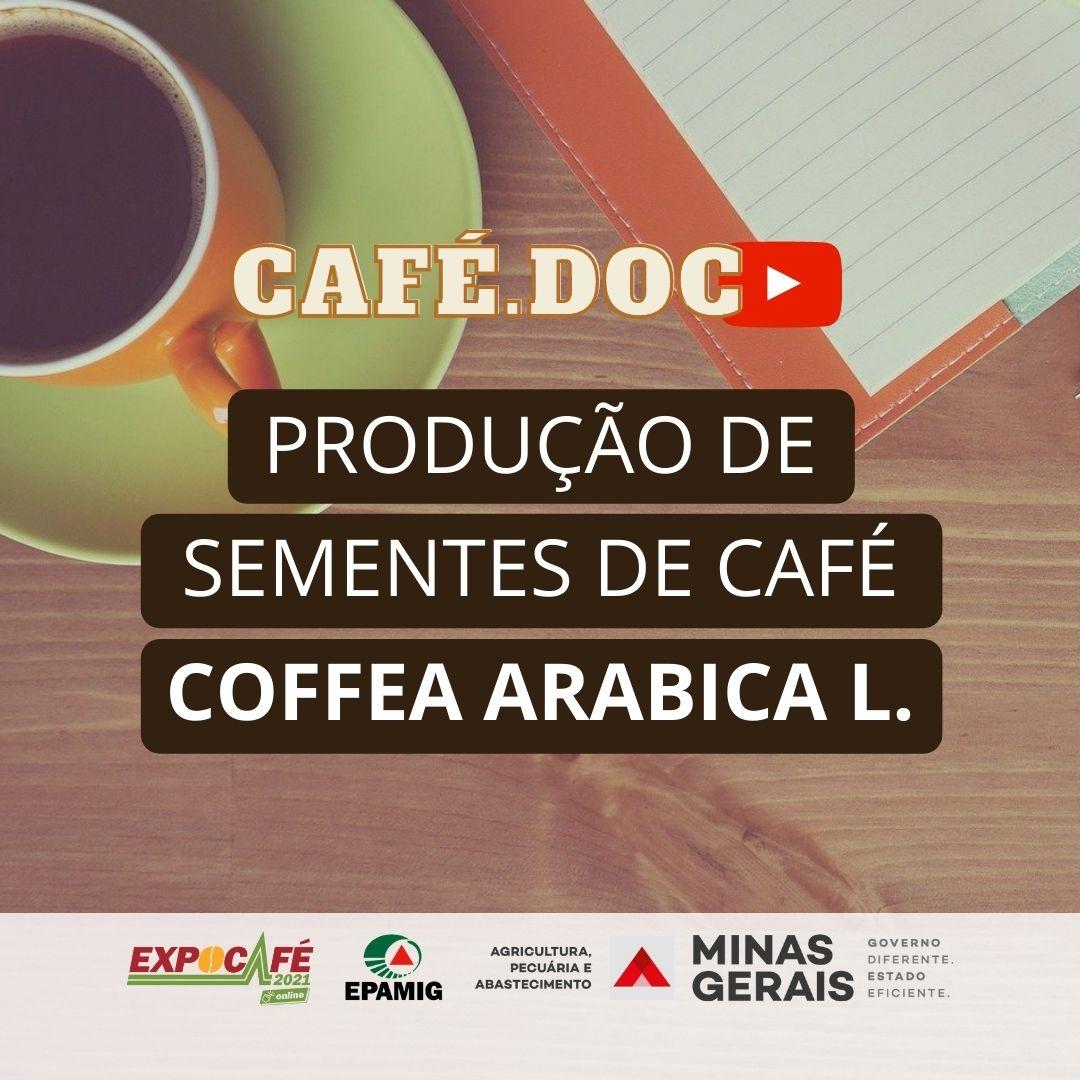 Produção de sementes de café Coffea Arabica